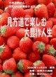 小林正観さん文化の日講演会DVD 〜見方道で楽しむ大豊作人生〜 『ネコポス』